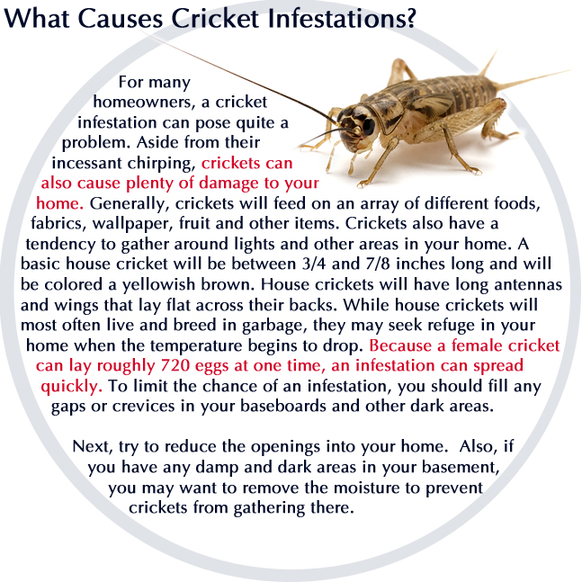 Arizona Pest Control Services